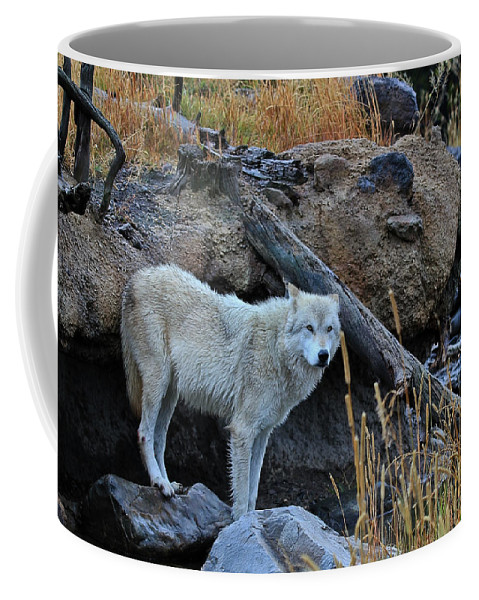 Wolves Coffee Mug featuring the photograph Wolf In The Wild by Athena Mckinzie