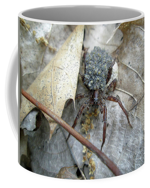 Spider Coffee Mug featuring the photograph Wolf Spider And Spiderlings by Mother Nature