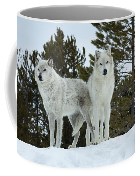 Wolf Coffee Mug featuring the photograph Wolves - Partners by Fran Riley