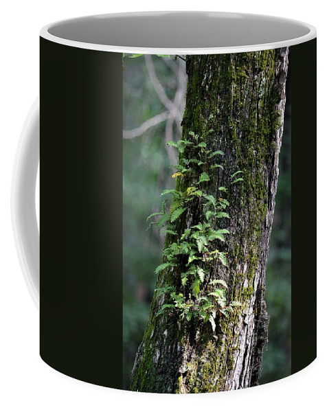 Wood Flora 2013 Coffee Mug featuring the photograph Wood Flora 2013 by Maria Urso