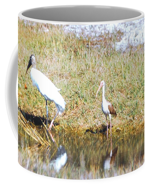 North Ft.myers Coffee Mug featuring the photograph Wood Stork And Ibis And Heron by Robert Floyd