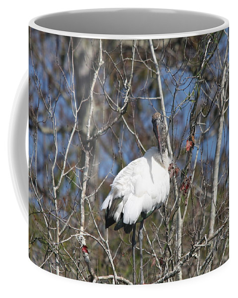Wood Stork Coffee Mug featuring the photograph Wood Stork In A Tree by Christiane Schulze Art And Photography