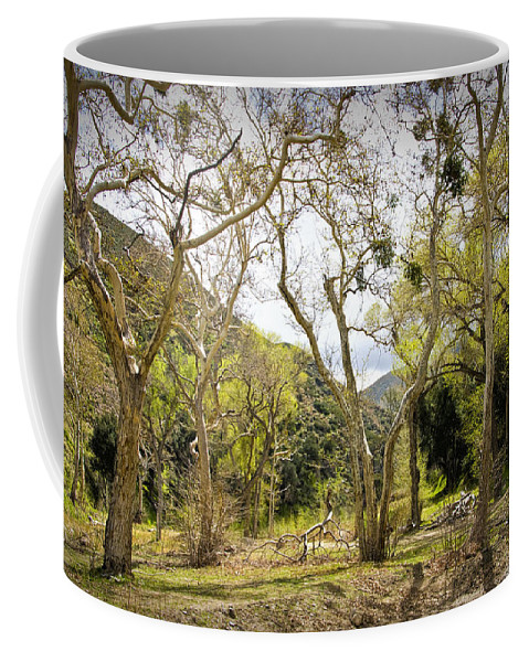 Art Coffee Mug featuring the photograph Woodland Glen In The California Vallecito Mountains by Randall Nyhof