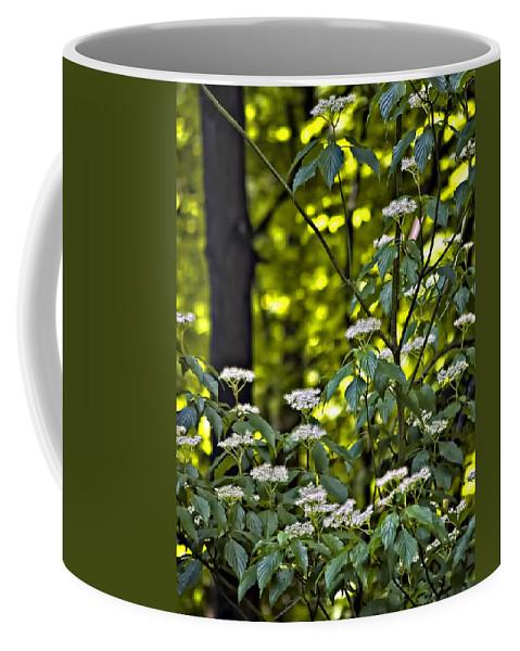 Woods Coffee Mug featuring the photograph Woods Faeries by Steve Harrington