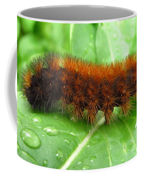 Wooly Bears Wooly Bear Caterpillar Images Fuzzy Caterpillar Prints Isabella Tiger Moth Caterpillar Orange And Black Caterpillar Black And Brown Caterpillar Maryland Caterpillar Identification Caterpillar Id American Caterpillars Spiny Caterpillar Harmless Caterpillars Entomology Natural Science Nature Prints Naturalist Nature Study Nature Walk Nature Photography Tree Hugger Oldgrowth Forest Biodiversity Preservation Wildlife Conservation Organic Garden Organic Farming Banded Wooly Bear Pics Coffee Mug featuring the photograph Wooly Bear by Joshua Bales