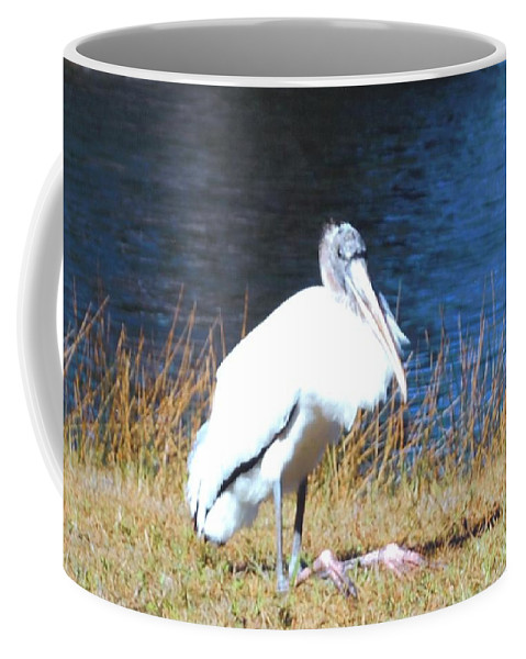 Resting On His Knees At Lakes Park In Ft.myers Coffee Mug featuring the photograph Wordstork by Robert Floyd
