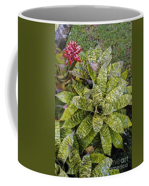 Monteverde Costa Rica Bromeliad Plant Tropical Plants Bloom Blooms Gardens Gardens Leaf Leaves Still Life Nature Coffee Mug featuring the photograph Yellow And Green Bromeliad by Bob Phillips