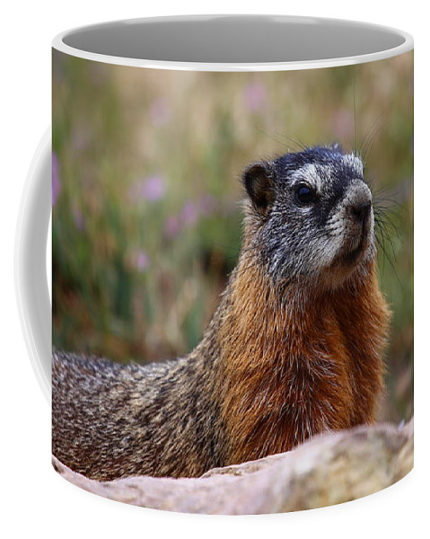 Marmot Coffee Mug featuring the photograph Yellow Bellied Marmot by Marty Fancy