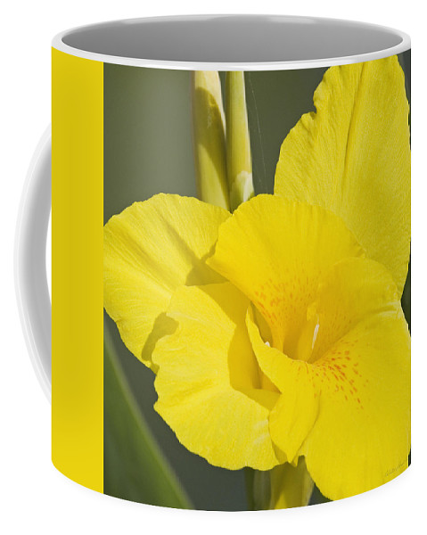 Yellow Coffee Mug featuring the photograph Yellow Canna 2 by Walter Herrit