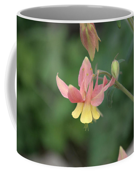 Flower Coffee Mug featuring the photograph Yellow Columbine by Frank Madia