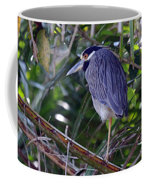 Costa Rica Coffee Mug featuring the photograph Yellow Crowned Night-heron by Bob Hislop