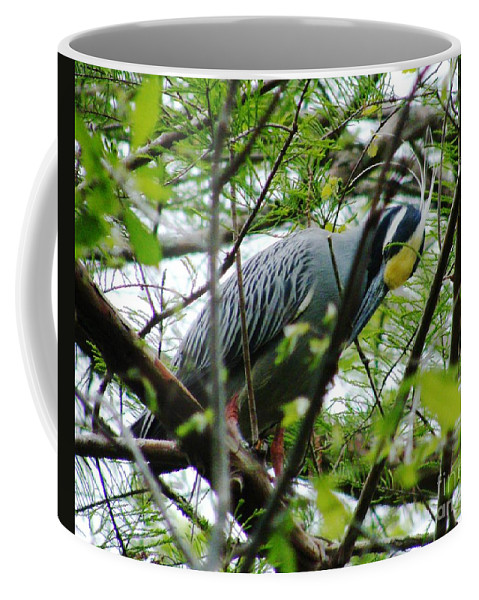Bird Coffee Mug featuring the photograph Yellow Crowned Night Heron In Display by Lizi Beard-Ward