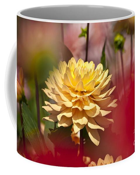 Heiko Coffee Mug featuring the photograph Yellow Dahlia 2 by Heiko Koehrer-Wagner