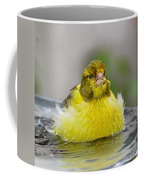 Yellow Finch Coffee Mug featuring the photograph Yellow Finch by Olga Hamilton