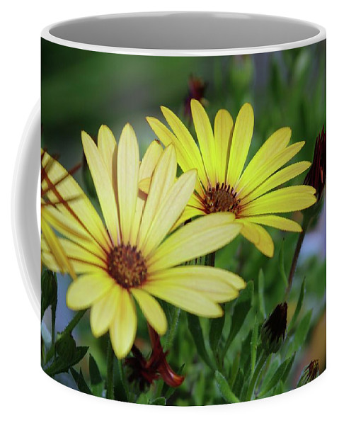 Yellow Flowers Coffee Mug featuring the photograph Yellow Flowers by Jeff Swan