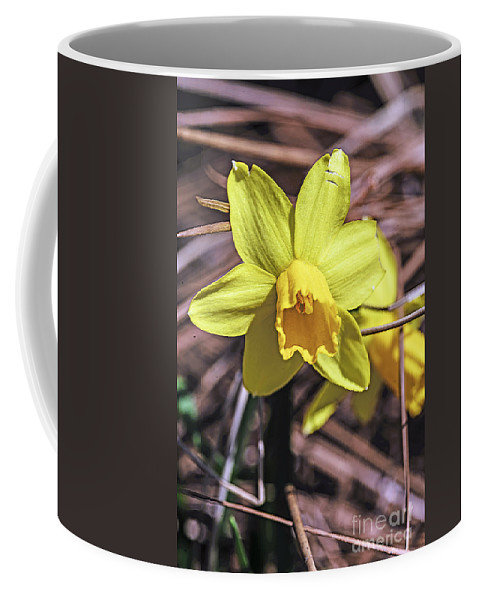 A Yellow Daffodil Emerges From The Newly Warm Spring Time Soil To Take On A Gun Like Glow. Coffee Mug featuring the photograph Yellow Glory by Elvis Vaughn