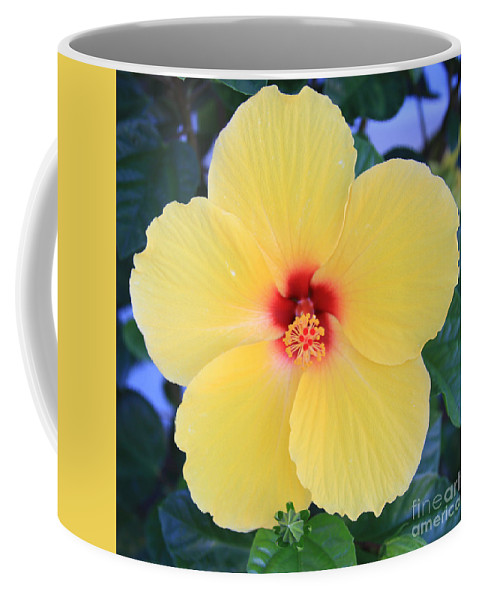 Yellow Hibiscus Coffee Mug featuring the painting Yellow Hibiscus by Robin Maria Pedrero