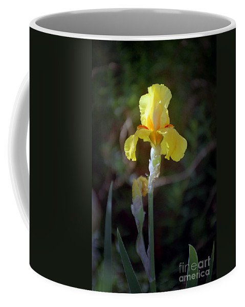 Iris Coffee Mug featuring the photograph Yellow Iris by Kathy McClure