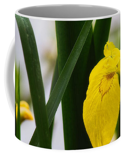 Europe Coffee Mug featuring the photograph Yellow Iris by Roberto Pagani