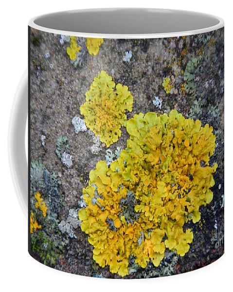 Yellow Lichen Coffee Mug featuring the photograph Yellow Lichen by Loreta Mickiene