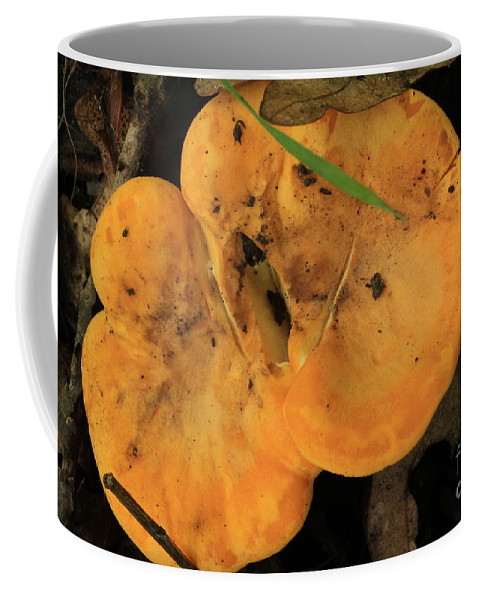 Mushroom Coffee Mug featuring the photograph Yellow Mushroom by Rick Rauzi