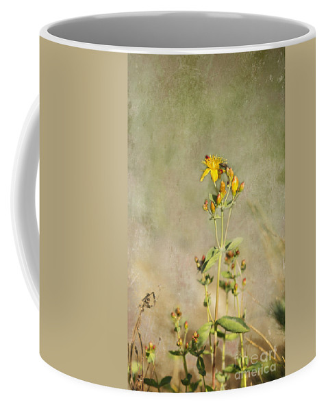 Wildflower Coffee Mug featuring the photograph Yellow-red Wildflower With Texture by Belinda Greb