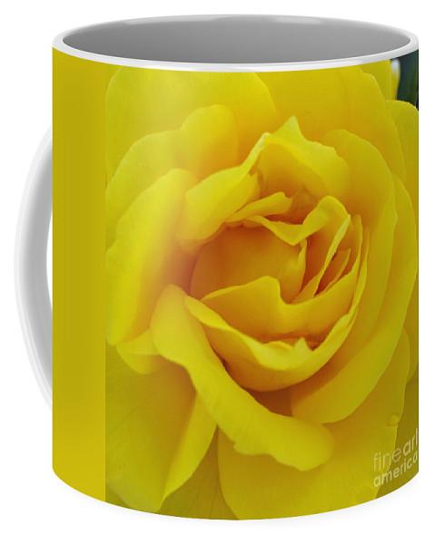 Beautiful Coffee Mug featuring the digital art Yellow Rose by Jacklyn Duryea Fraizer