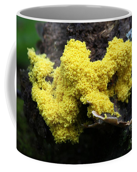 Mushrooms Coffee Mug featuring the photograph Yellow Slime by Rick Rauzi