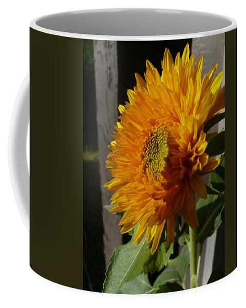 Yellow Coffee Mug featuring the photograph Yellow Sunflower by Nicki Bennett