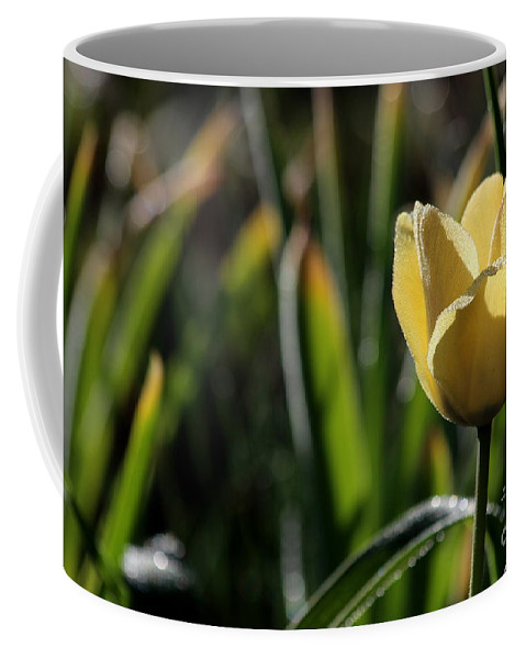 Single Coffee Mug featuring the photograph Yellow Tulip With Dew by Kenny Glotfelty