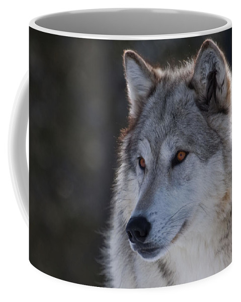 Wolf Coffee Mug featuring the photograph Yellowstone Wolf by Diana Marcoux