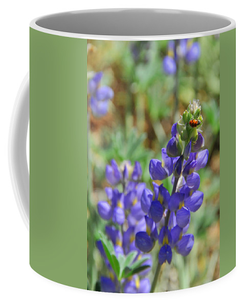 Lupines Coffee Mug featuring the photograph Yosemite Lupine And Ladybug by Lynn Bauer