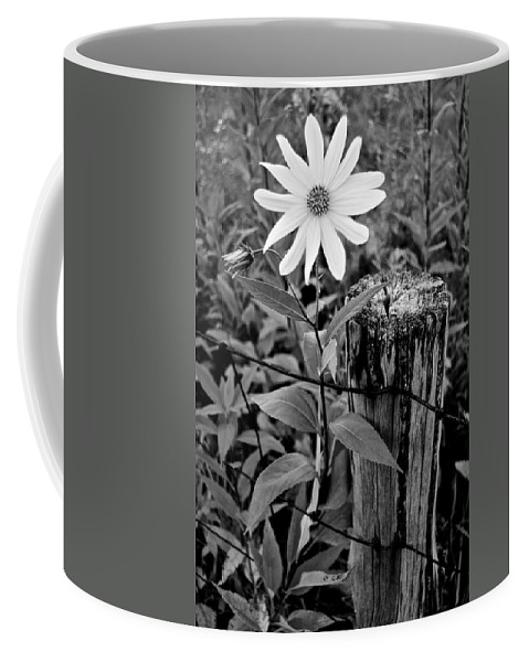Black Coffee Mug featuring the photograph You Are My Sunshine by Frozen in Time Fine Art Photography