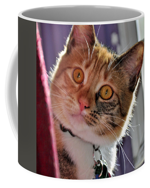 Feline Coffee Mug featuring the photograph You Talking To Me? by Tikvah's Hope
