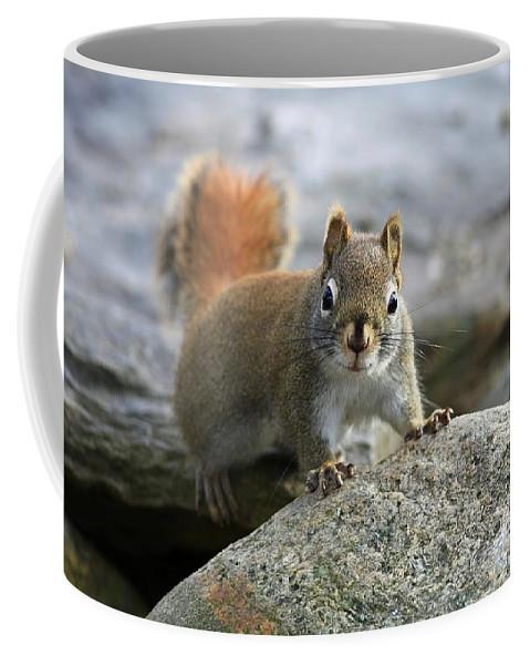 Animal Coffee Mug featuring the photograph You Wanna Chat by Deborah Benoit