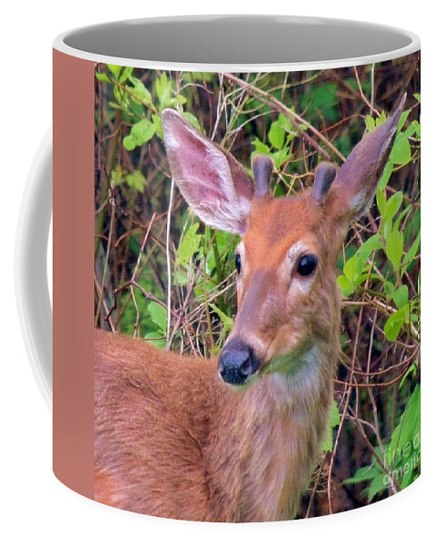 Wildlife Coffee Mug featuring the photograph Young Buck by Paul Smith