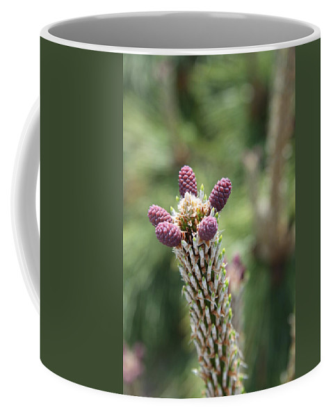 Cones Coffee Mug featuring the photograph Young Cones by Christiane Schulze Art And Photography