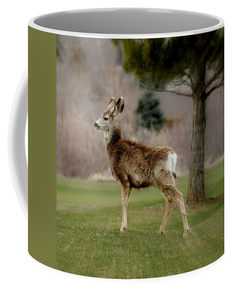 Big Ears Coffee Mug featuring the photograph Young Mule Deer by Ernie Echols