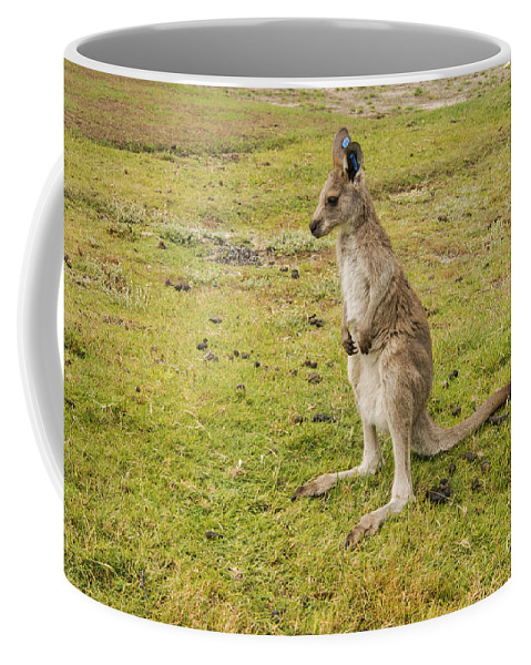 Great Ocean Road Australia Angles Golf Club Boxing Young Kangaroo Kangaroos Animal Animals Creature Creatures Grass Grasses Coffee Mug featuring the photograph Young Roo by Bob Phillips