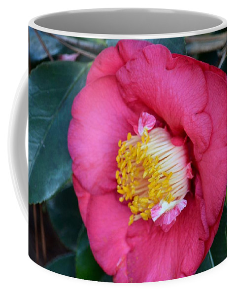 Yuletide Camelia Coffee Mug featuring the photograph Yuletide Camelia by Maria Urso
