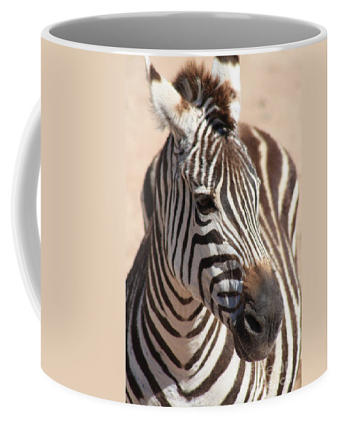 Zebra Coffee Mug featuring the photograph Zebra by Brandi Maher