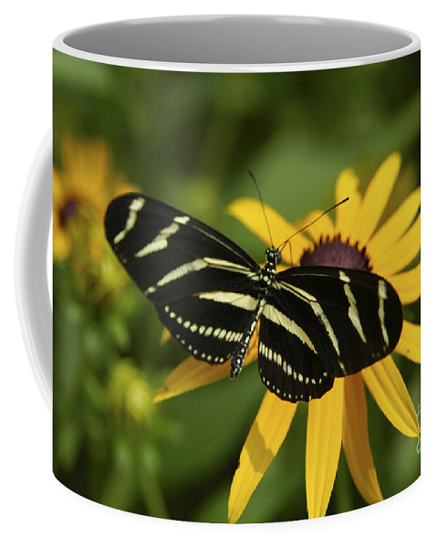 Butterfly Coffee Mug featuring the photograph Zebra Butterfly by Anthony Sacco