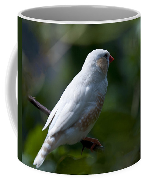 Zebra Finch Coffee Mug featuring the photograph Zebra Finch Of Australia by Paul Cannon