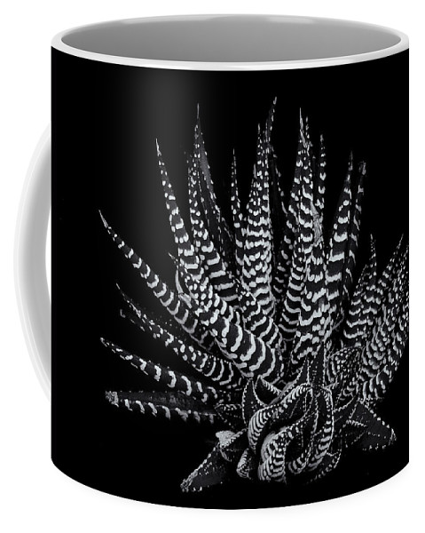 Succulent;black & White Coffee Mug featuring the photograph Zebra Succulent by Robert Woodward