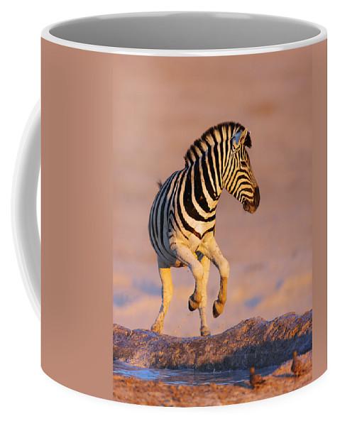 Wild Coffee Mug featuring the photograph Zebras Jump From Waterhole by Johan Swanepoel