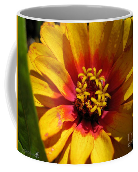 Mccombie Coffee Mug featuring the photograph Zinnia Named Swizzle Scarlet And Yellow by J McCombie