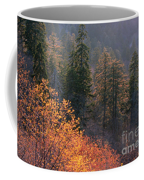 Coffee Mug featuring the photograph Great Smoky Mountains Morning by Sandra Bronstein