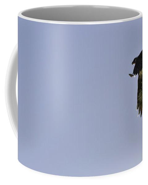 Osprey Coffee Mug featuring the photograph Osprey Lunch To Go IIi by Christine Stonebridge
