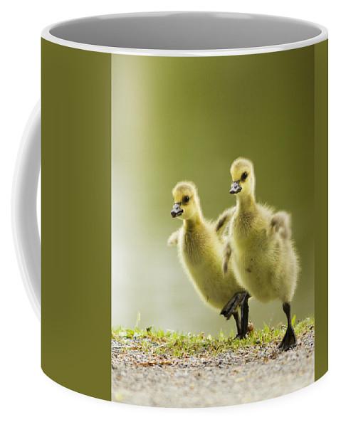 Canada Coffee Mug featuring the photograph 1 2 3 Go by Mircea Costina Photography