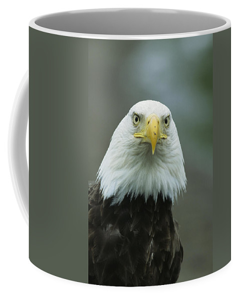 Animals Coffee Mug featuring the photograph A Close View Of An American Bald Eagle by Tom Murphy